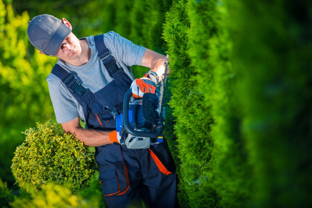 Arborist trimming a hedge with a gas powered hedge trimmer