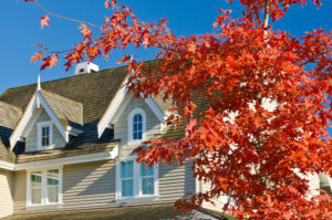 maple tree at ottawa house