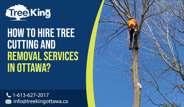 How to Hire Tree Cutting and Removal Services in Ottawa?